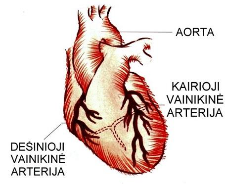 bukletai apie hipertenziją